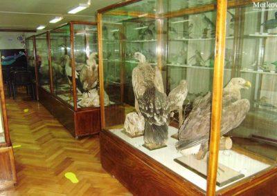 Ornitološka zbirka